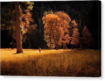 Searching For Light Canvas Print