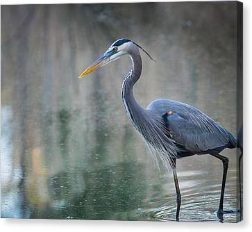 Canvas Print featuring the photograph Searching For Lunch by Julie Andel