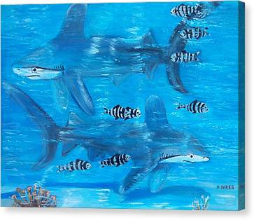 Searching Sharks Canvas Print