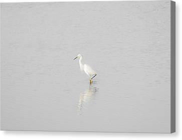 Seascape Gulf Coast, Ms F70d Canvas Print by Otri Park