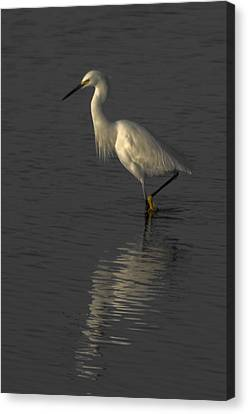 Seascape Gulf Coast, Ms F70n Canvas Print by Otri Park