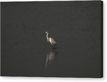 Seascape Gulf Coast, Ms F70p Canvas Print by Otri Park