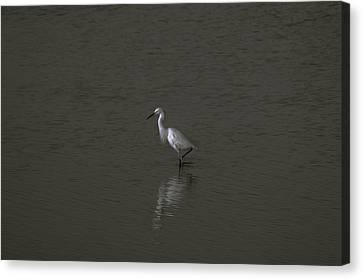 Seascape Gulf Coast, Ms F70q Canvas Print by Otri Park