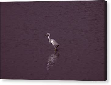 Seascape Gulf Coast, Ms F70s Canvas Print by Otri Park