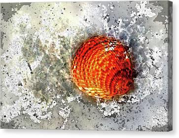 Seashell Art  Canvas Print