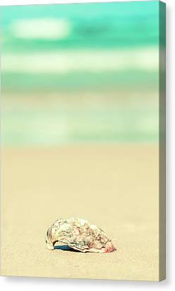 Seashell By The Sea Shore Canvas Print by Az Jackson