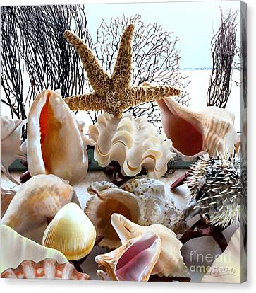 Seashell Galore Canvas Print
