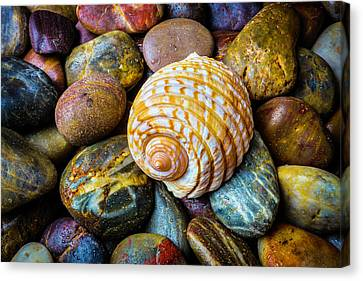 Seashell On River Rocks Canvas Print by Garry Gay