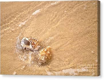 Seashell Turbulence Canvas Print by Kaye Menner