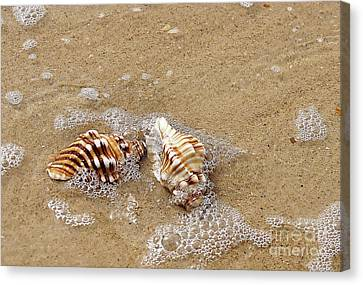 Seashells And Bubbles 2 Canvas Print by Kaye Menner