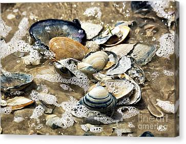 Canvas Print featuring the photograph Seashells In The Ocean by John Rizzuto