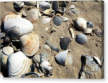 Canvas Print featuring the photograph Seashells by John Rizzuto