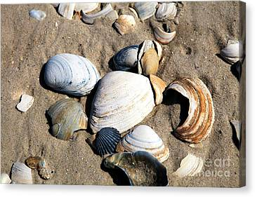 Canvas Print featuring the photograph Seashells On The Beach by John Rizzuto