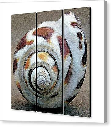 Canvas Print featuring the photograph Seashells Spectacular No 2 - Triptych by Ben and Raisa Gertsberg