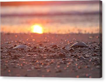 Seashells Suns Reflection Canvas Print