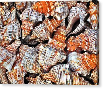 Seashells. Texture. Canvas Print by Andy Za