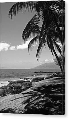 Seashore Palm Trees Canvas Print