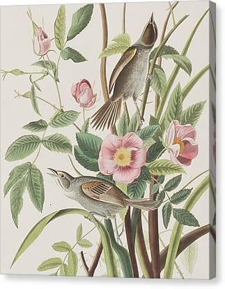 Seaside Finch Canvas Print