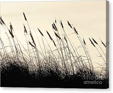 Seaside Oats Canvas Print by Joy Hardee