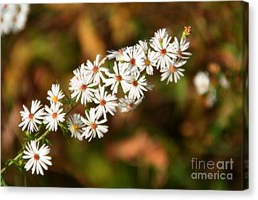 Canvas Print featuring the photograph Season Delights by Adrian LaRoque