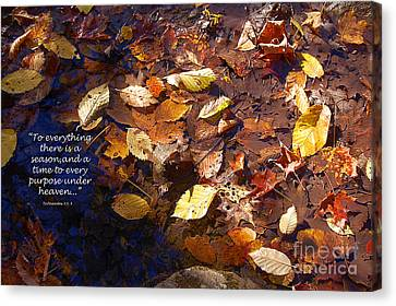 Canvas Print featuring the photograph Seasons by Diane E Berry