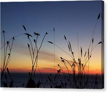 Seasons End Canvas Print by Angi Parks