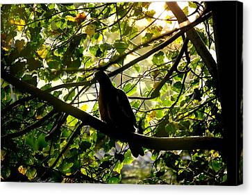 Canvas Print featuring the photograph Seasons Will Change by Bernd Hau