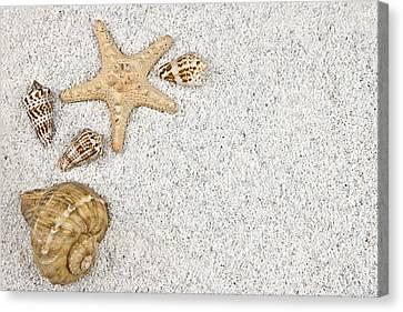 Seastar And Shells Canvas Print by Joana Kruse