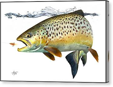 Seatrout Canvas Print by Anders Ovesen
