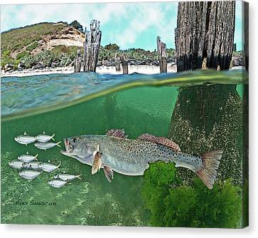 Seatrout Attack Canvas Print by Alex Suescun