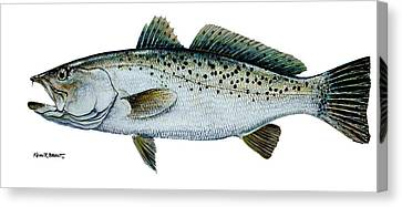 Seatrout Canvas Print by Kevin Brant