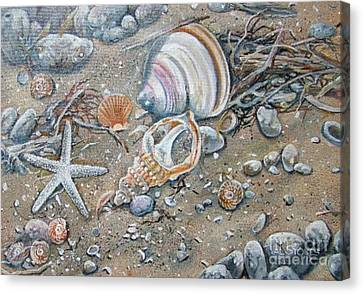 Seaweed And Shells Canvas Print by Val Stokes