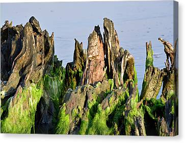 Seaweed-covered Beach Stump Mountain Range Canvas Print by Bruce Gourley