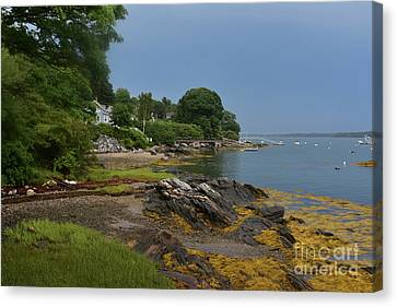 Seaweed Covered Rocks On The Coast Of Bustin's Island Canvas Print by DejaVu Designs
