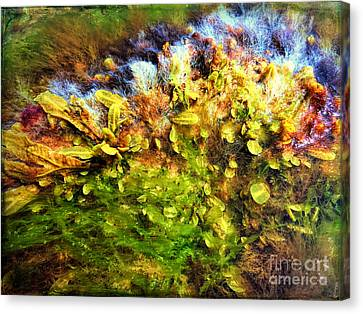 Seaweed Grunge Canvas Print by Todd Breitling
