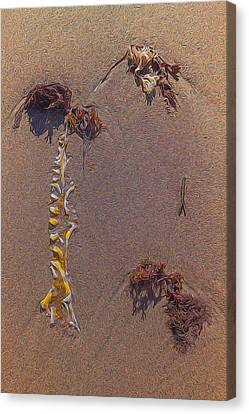 Seaweed On Clayhead Beach Canvas Print by Todd Breitling