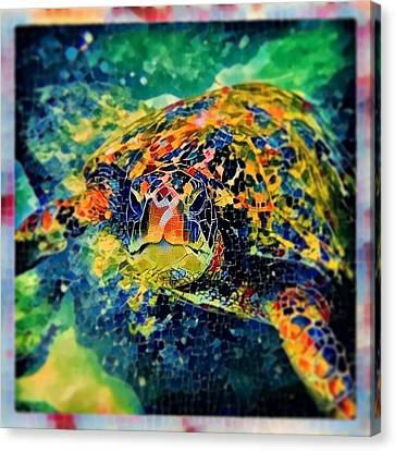 Sebastian The Turtle Canvas Print by Erika Swartzkopf