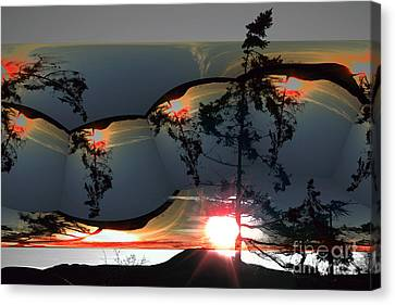 Sechelt Tree 12 Canvas Print by Elaine Hunter