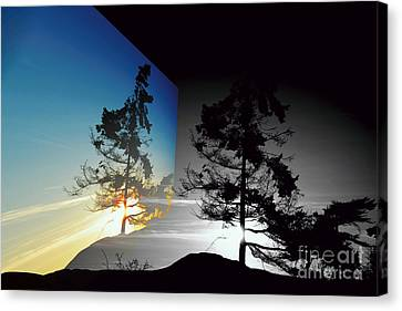 Sechelt Tree Canvas Print by Elaine Hunter