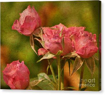 Second Hand Roses Canvas Print