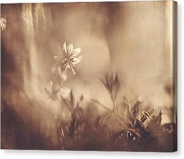 Secret Admirer Canvas Print