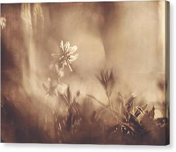 Canvas Print featuring the photograph Secret Admirer by Kharisma Sommers