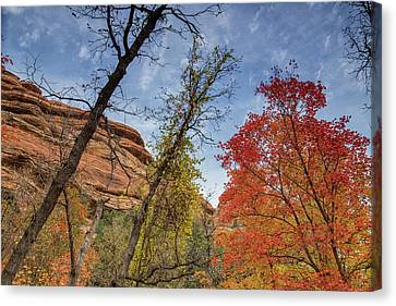 Sedona Fall Colors Canvas Print
