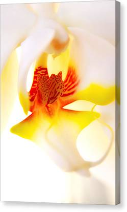 Canvas Print featuring the photograph Seductive Is The Orchid by Michael Hope