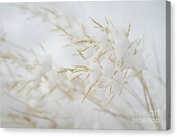 Seeds Of Winter Canvas Print