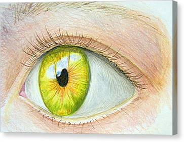 Seeing It Canvas Print by Heidi Copeman