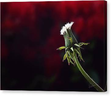 Canvas Print featuring the photograph Seeing Red by Kharisma Sommers