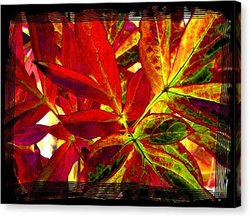 Select Peony Leaves Canvas Print by Will Borden