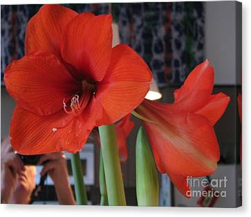 Canvas Print featuring the photograph Self Portrait With Amaryllis by Erik Falkensteen
