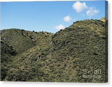 Semi-desert Habitat, Arizona Canvas Print